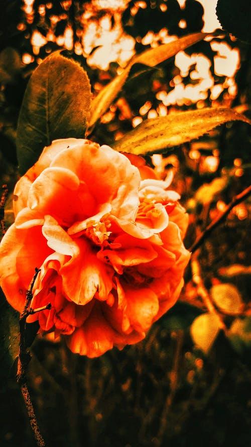 Fotobanka sbezplatnými fotkami na tému #daytime, #detail, #kvetina, #macro