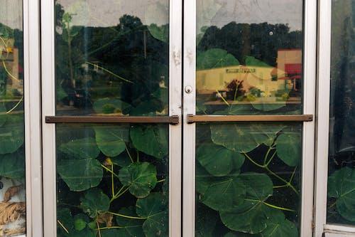 Gratis stockfoto met binnenkomst, bladeren, buiten, buitenkant