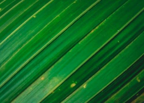 Fotobanka sbezplatnými fotkami na tému čiara, príroda, rastlina, šikmý