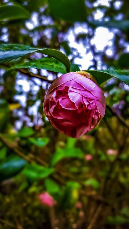 #během dne, #květiny, #mobilechallenge