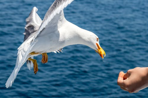Close-Up Photo of Person Feeding Seagull