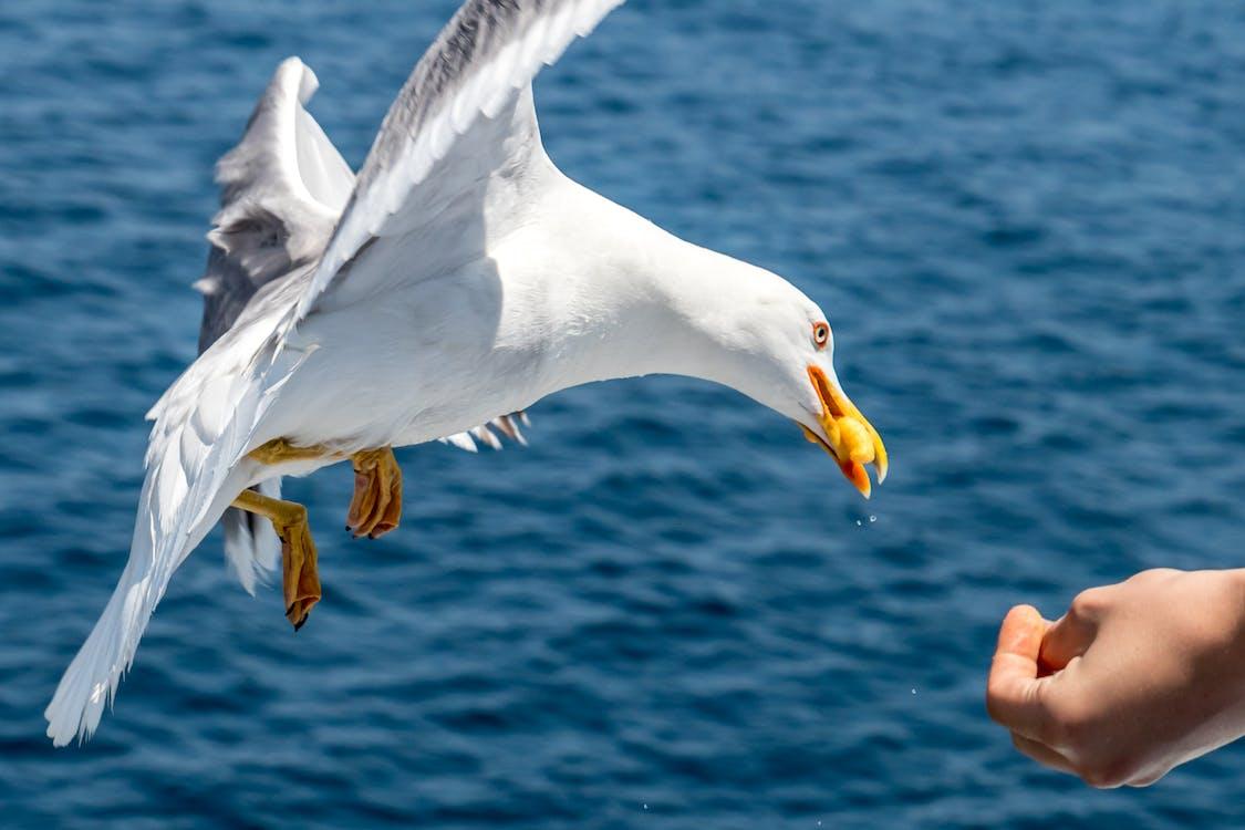 al aire libre, alas, animal