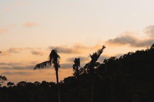 4k duvar kağıdı, açık hava, ağaçlar, akşam karanlığı içeren Ücretsiz stok fotoğraf