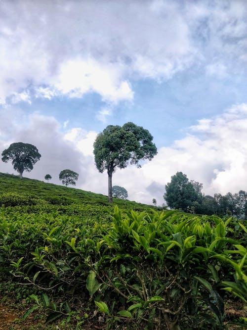 Ilmainen kuvapankkikuva tunnisteilla luonto, mieliala, pilvet, puut
