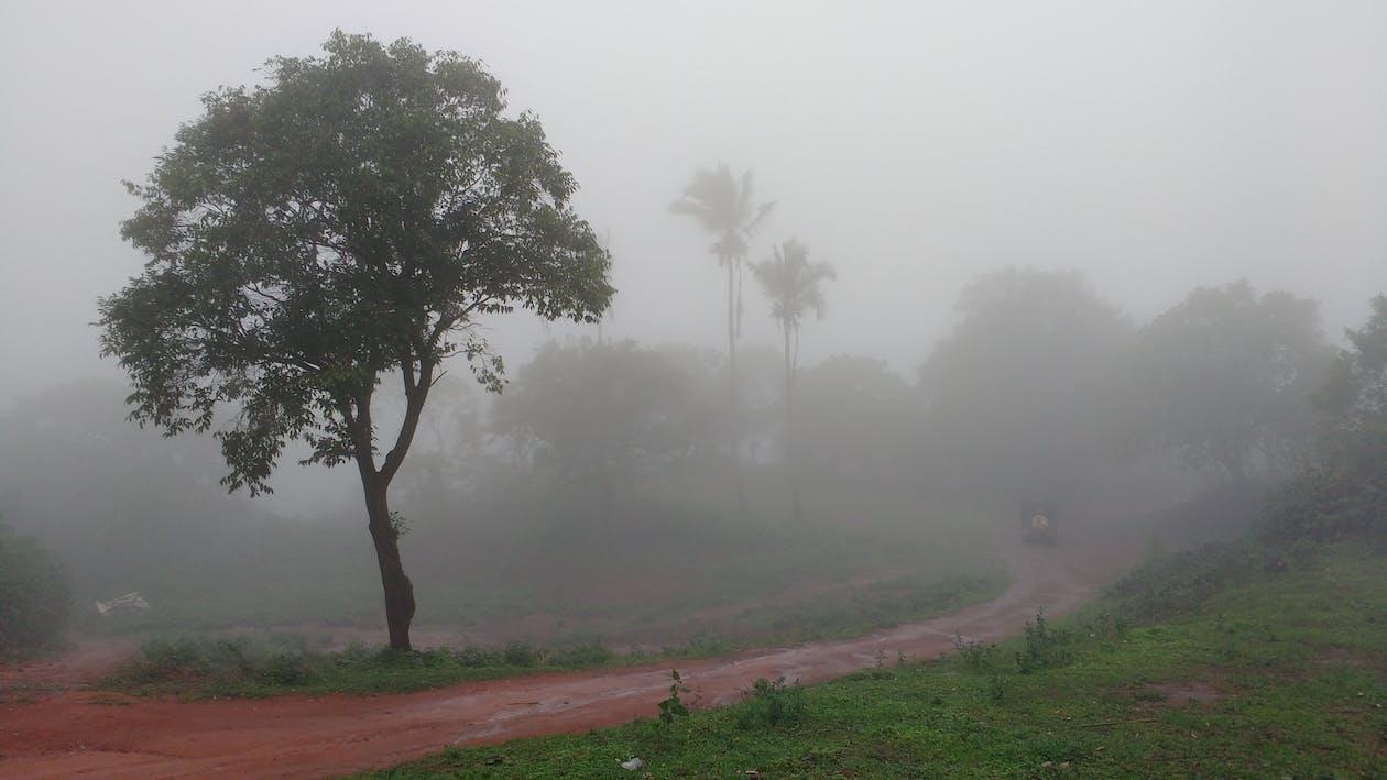 mist, roadtrip, rondgang