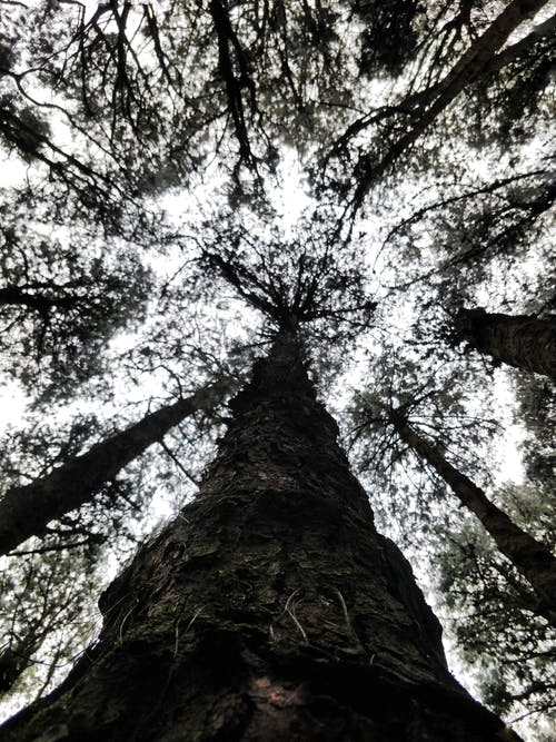 Ilmainen kuvapankkikuva tunnisteilla puu
