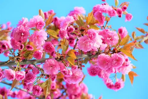 Ảnh lưu trữ miễn phí về cánh hoa, Đầy màu sắc, độ sâu trường ảnh, hệ thực vật