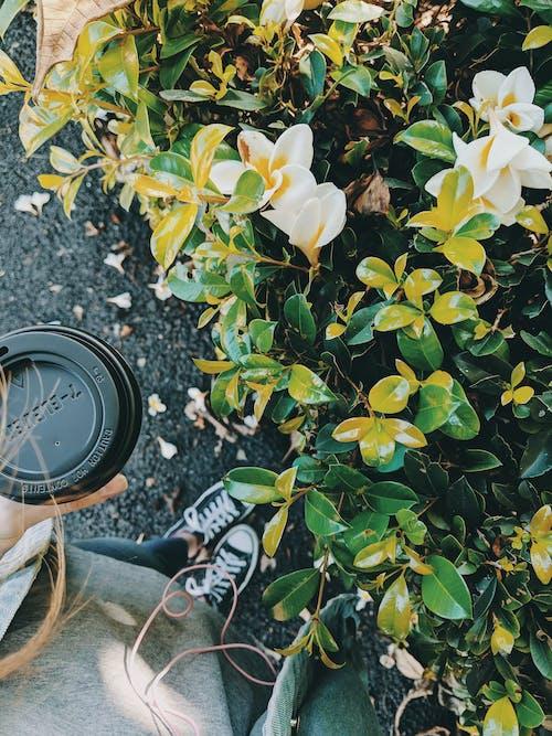 Immagine gratuita di arbusto, bellissimo, bevanda, bevanda al caffè