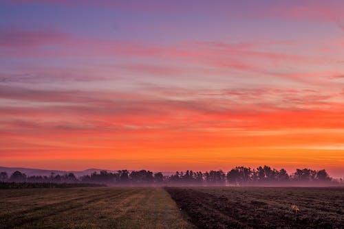 Foto d'estoc gratuïta de alba, arbres, boira, camp