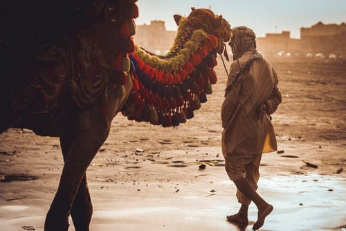 Man Near Camel