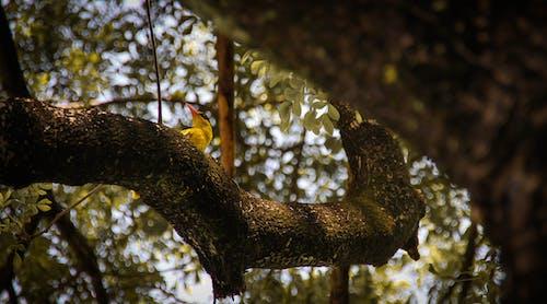 Kostnadsfri bild av fågel, grön, skön, skönhet i naturen