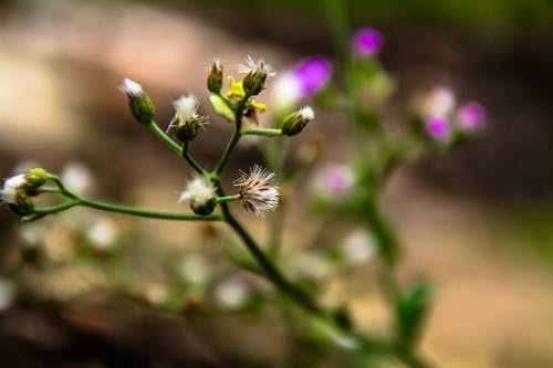 Kostnadsfri bild av anläggning, moder natur, skönhet i naturen, vacker blomma