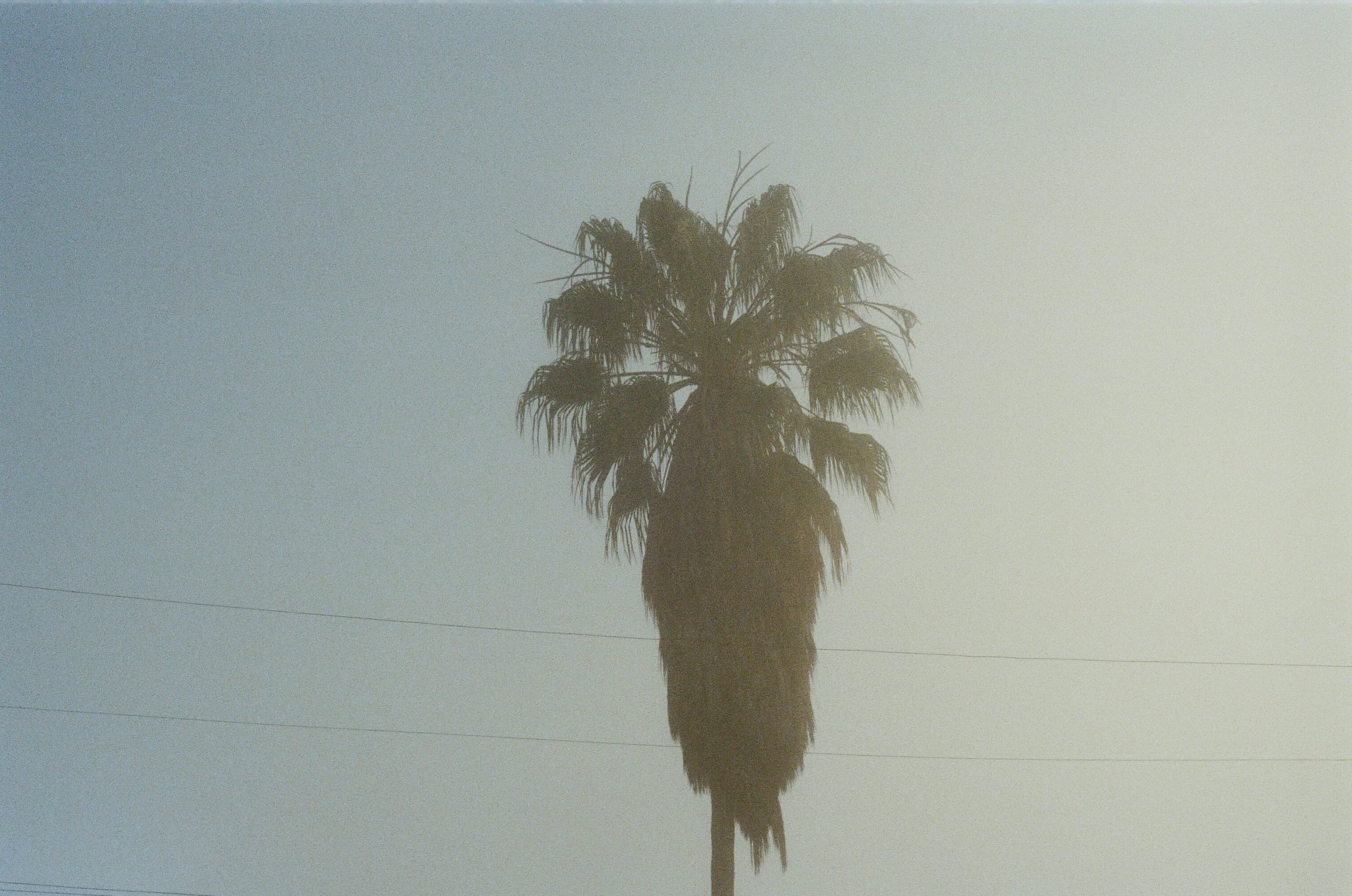 Coconut Tree Photography