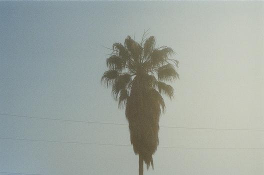 Free stock photo of palm