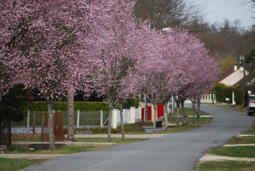 Kostnadsfri bild av fjäder, resår, rosa, träd
