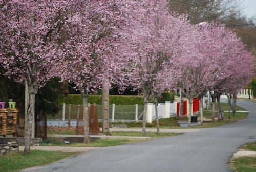 Kostnadsfri bild av blomma, fjäder, resår, rosa