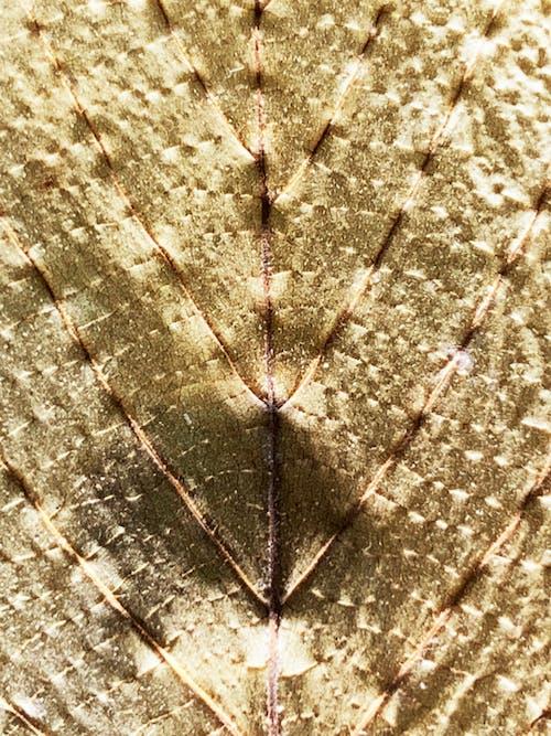 Ảnh lưu trữ miễn phí về kết cấu lá vàng, kết cấu vàng, lá, lá cây
