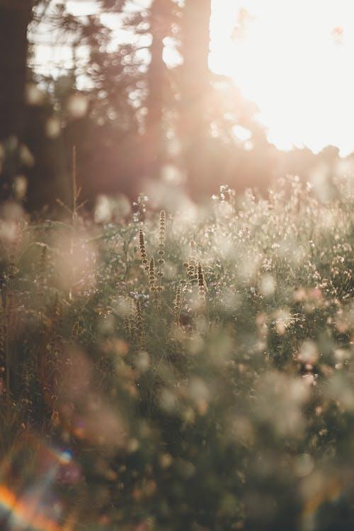 ánh sáng mặt trời, Bo mạch, cánh đồng hoa
