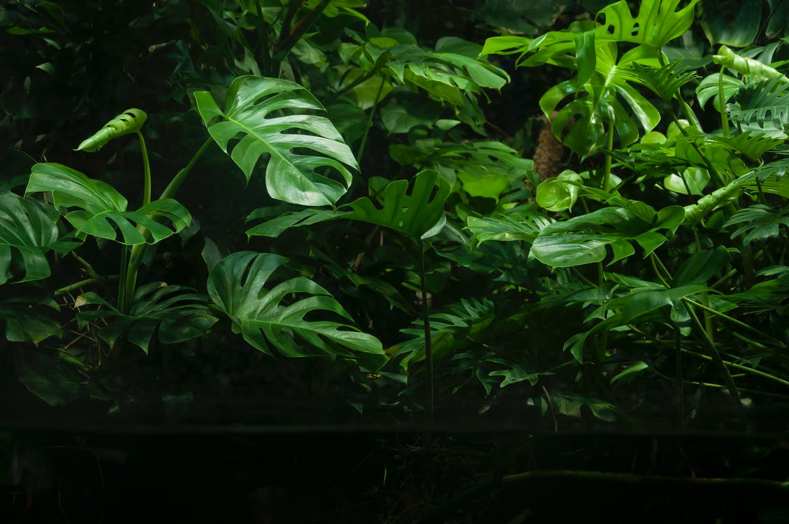 centrale, frunze, frunziș