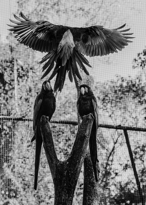 anodorhynchus, arara, arara azul grande, arara canindé içeren Ücretsiz stok fotoğraf