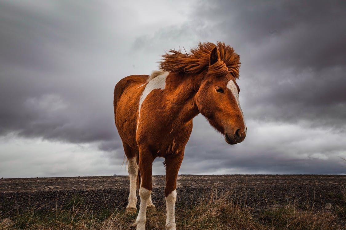 Photo of Horse on Grass Field Under Cloudy Sky