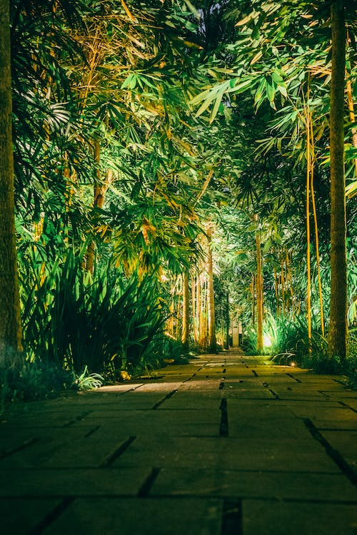 Free stock photo of bamboo, forest, night, path