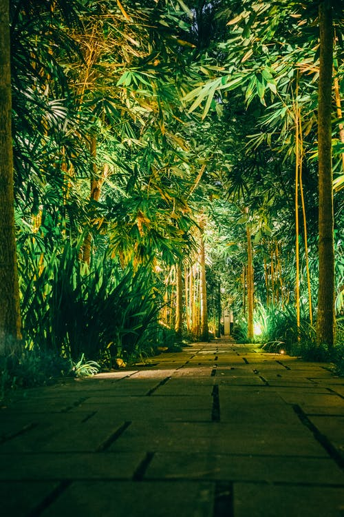 bamboo, forest, night