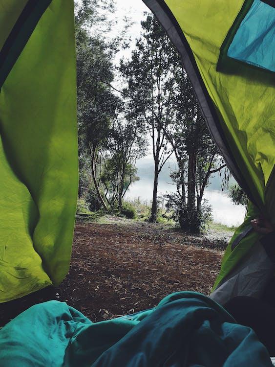 açık hava, ağaçlar, boş zaman