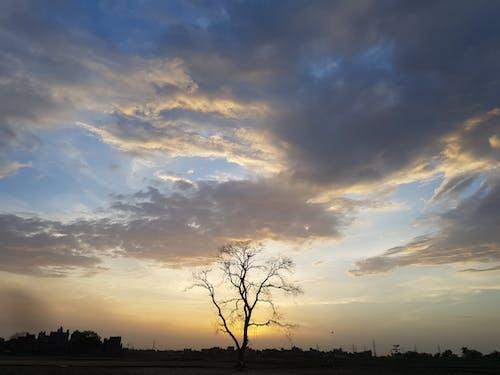 Free stock photo of nature, tree, view