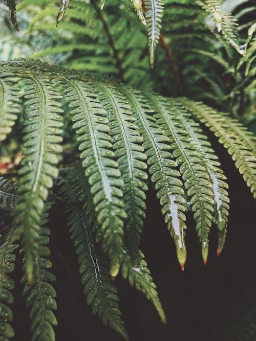 Wet Green Fern Leaves
