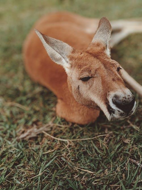 누워 있는, 동물, 동물 사진, 야생의 무료 스톡 사진