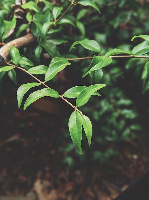 Gratis lagerfoto af blade, close-up, dybde, flora