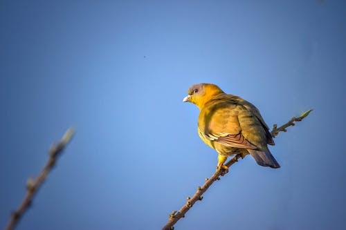 Gratis arkivbilde med fugler