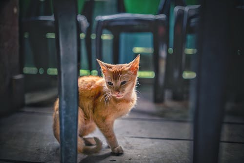 Gratis arkivbilde med katter