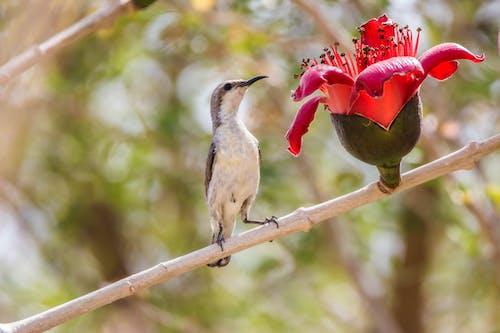 Gratis arkivbilde med fugl, fugler