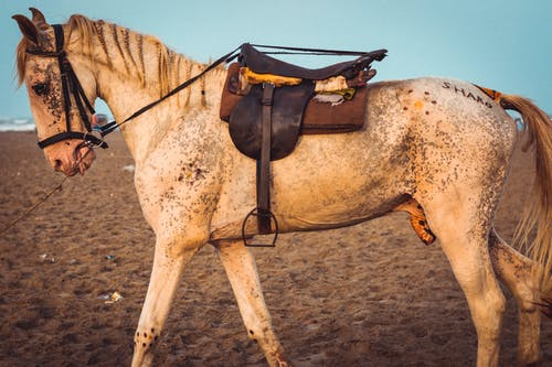 Photo of White Horse With Brown Leather Saddle Standing on Sand
