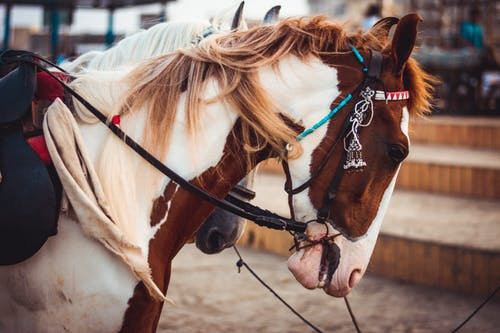 Free stock photo of 4k, 4k wallpaper, blur, close up