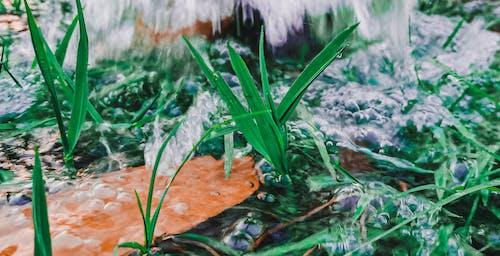 Gratis lagerfoto af dråber, græs, grønt græs, havvand