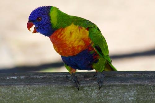 Gratis arkivbilde med fargerik fugl