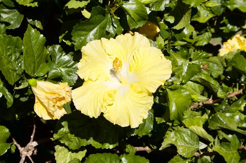 Gratis arkivbilde med gul blomst