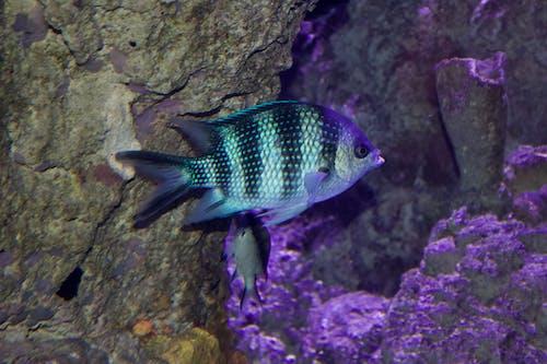 Gratis arkivbilde med tropisk fisk