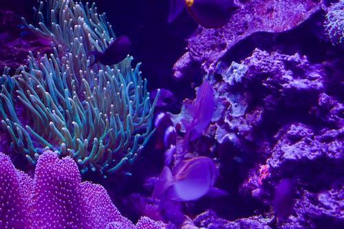 Gratis arkivbilde med korall