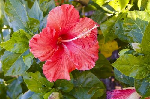 Gratis arkivbilde med blomst