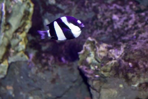 Gratis arkivbilde med svart og hvit fisk