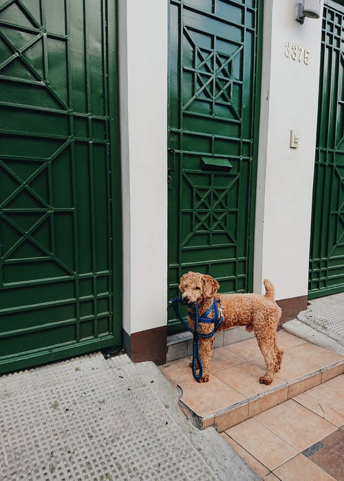 Photo of a Dog Standing Near Green Door