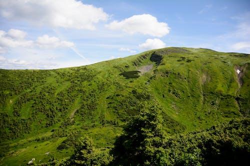 Gratis arkivbilde med dyreliv, fjell, fjelltopp, natur