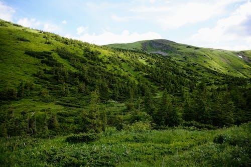 スカイライン, 山, 山岳, 自然の無料の写真素材