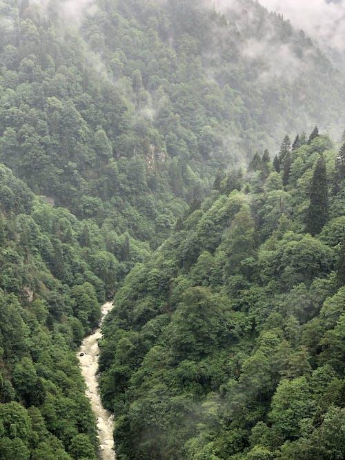 Fotos de stock gratuitas de al aire libre, arboles, bosque, brumoso
