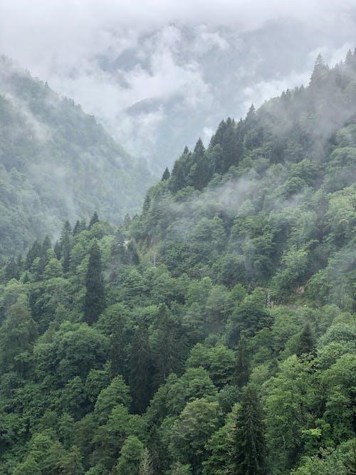 Fotos de stock gratuitas de al aire libre, arboles, con niebla, medio ambiente