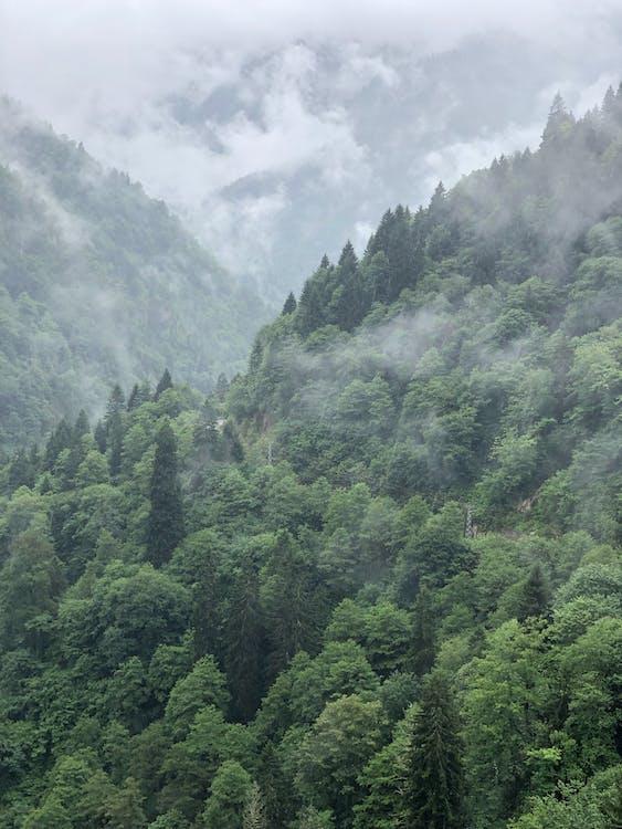 luonto, maisema, metsä